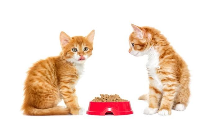 キャットフードと二匹の子猫