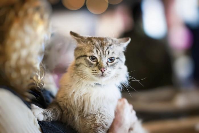 抱かれて嫌な顔をする猫