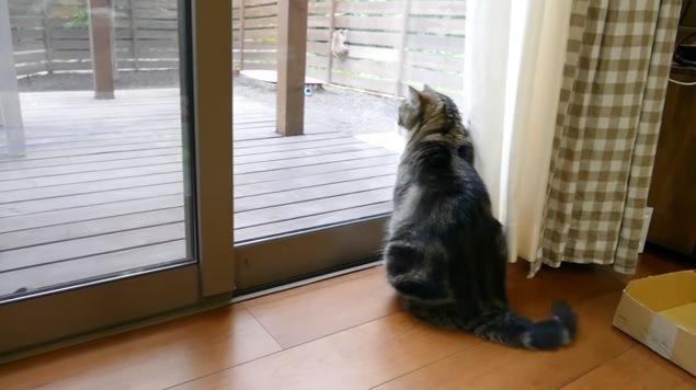 塀をよじ登る猿と見つめる猫