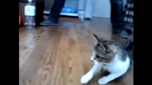 倒れかける猫
