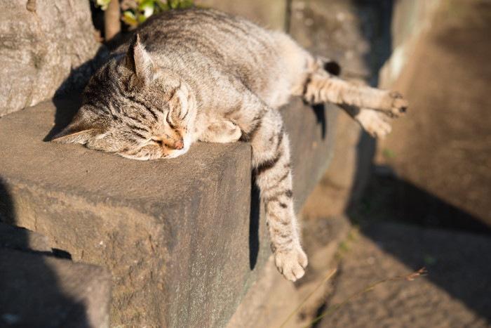 眠る野良猫