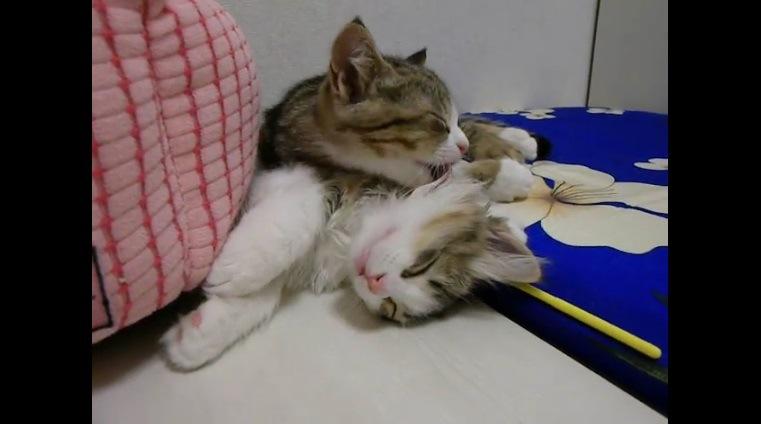 眠る子猫の首をなめる子猫