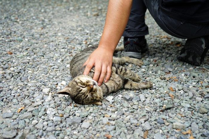 ノラ猫を触る男性