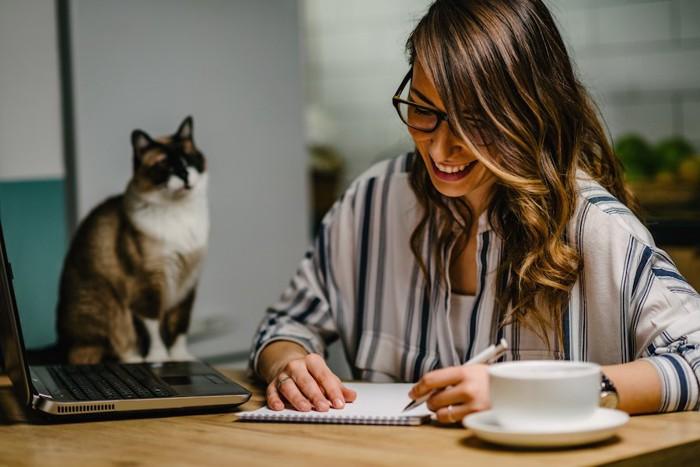 仕事中の飼い主を見つめる猫