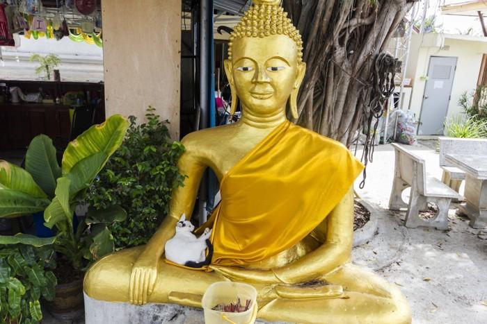 仏像の膝でくつろいでいる猫