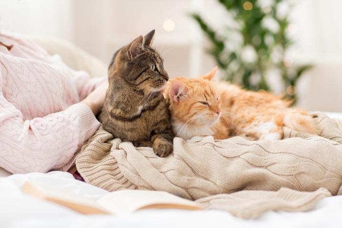 ベッドで飼い主のお腹の上で寝そべる2匹の猫
