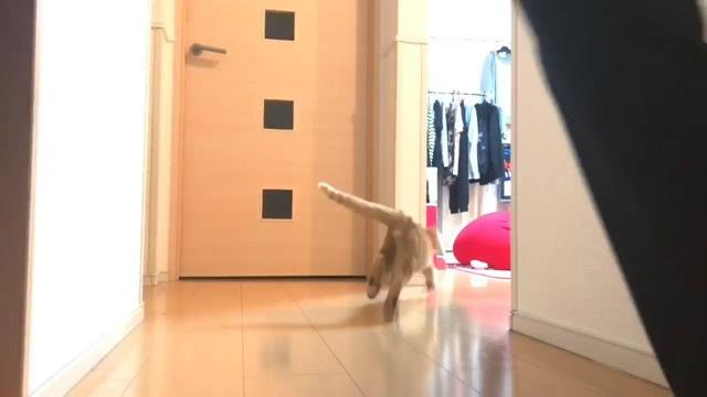 おもちゃを追いかけていく猫
