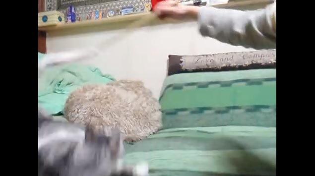 ソファから落ちる猫
