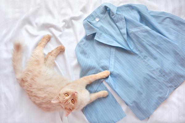 猫とルームウェアの上着