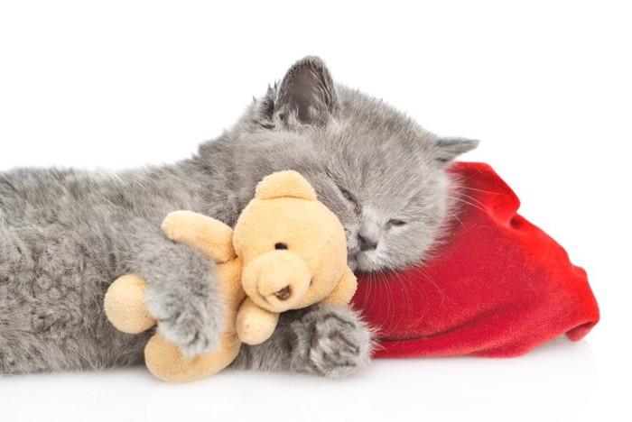 熊のぬいぐるみを抱きしめて赤い枕で寝る子猫