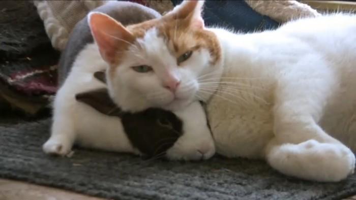 兎を枕にする猫