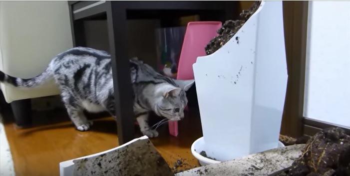 割れた花瓶を見に行く猫