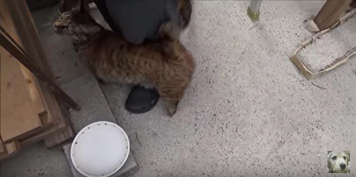 すり寄る猫たち