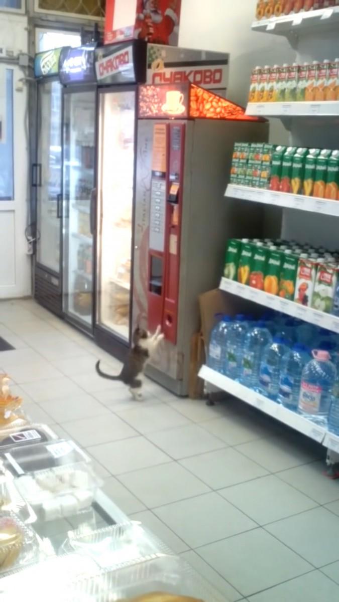また探す猫