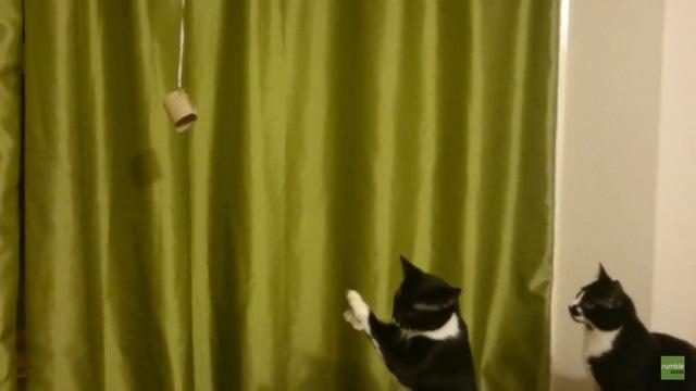 諦めかける猫