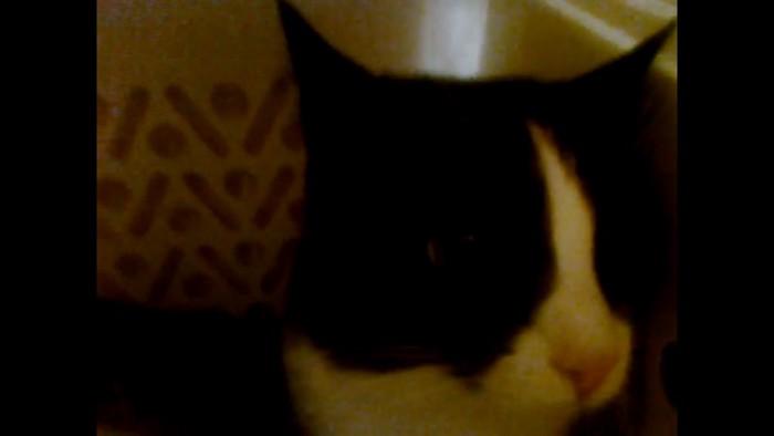 フタを開けると困惑顔の猫