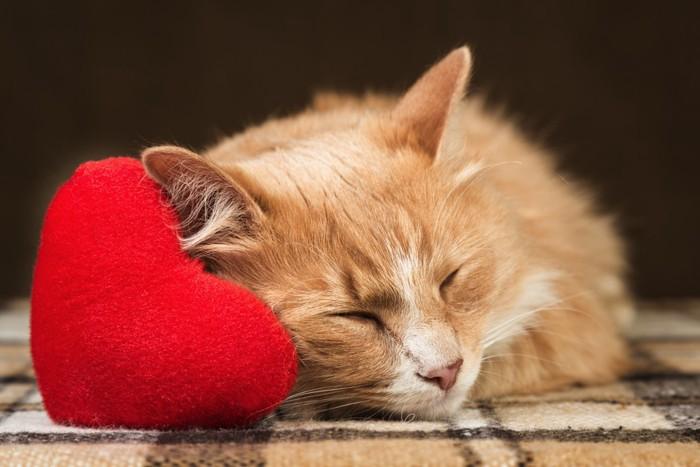 ハートのクッションで眠る猫