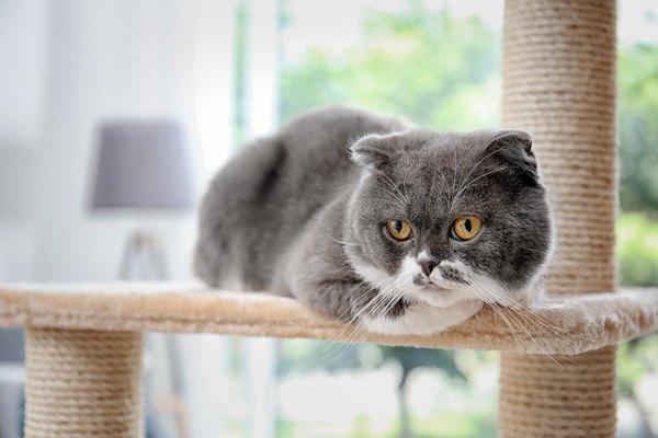 キャットツリーの上の猫