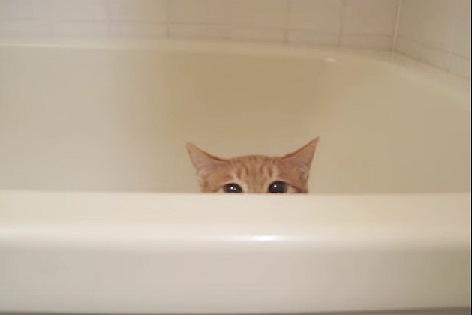 バスタブに沈む猫