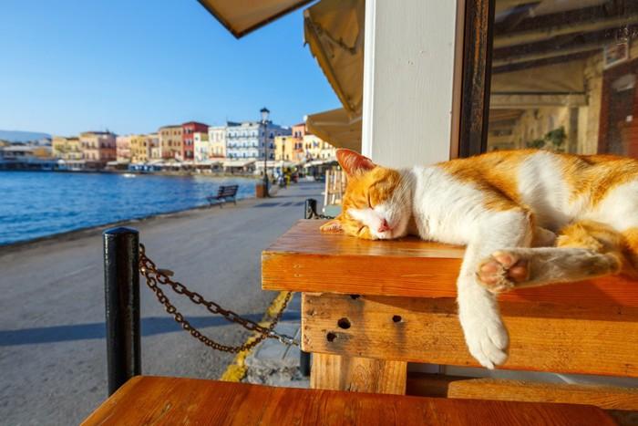 外でお昼寝中の猫