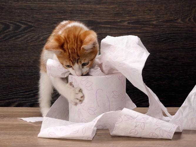 トイレットペーパーで遊ぶ子猫