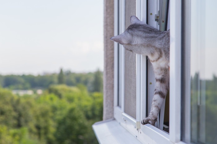 窓から外を覗く猫の写真