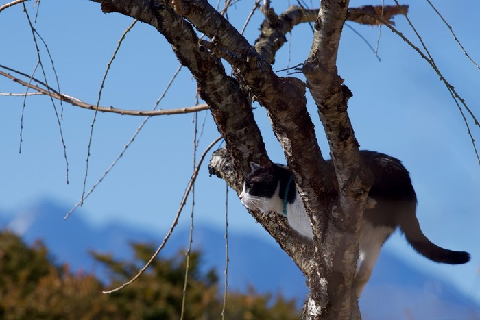 木登りする猫の写真