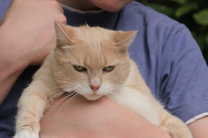 抱っこされて不機嫌そうな猫