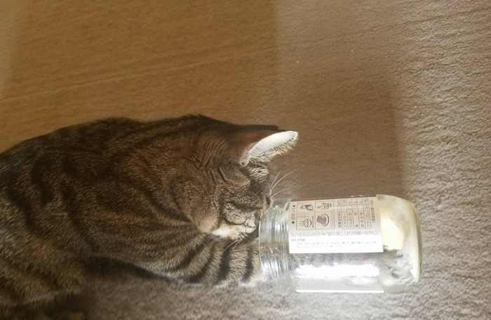キジトラメス・瓶に手を入れている所