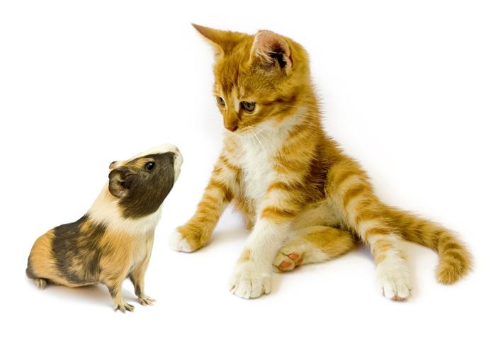 子猫とハムスター