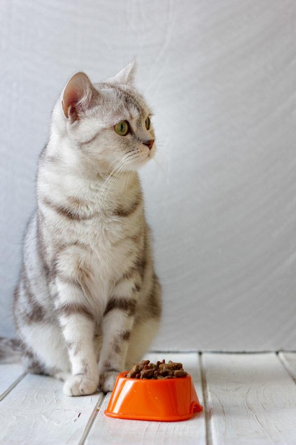 フードボールの横に立つ猫