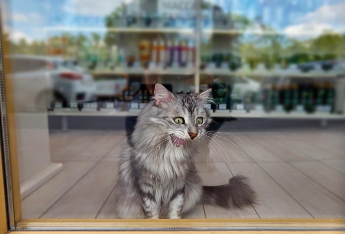 コンビニの猫