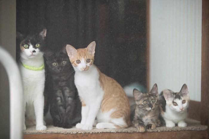 外を見る集団でいる猫