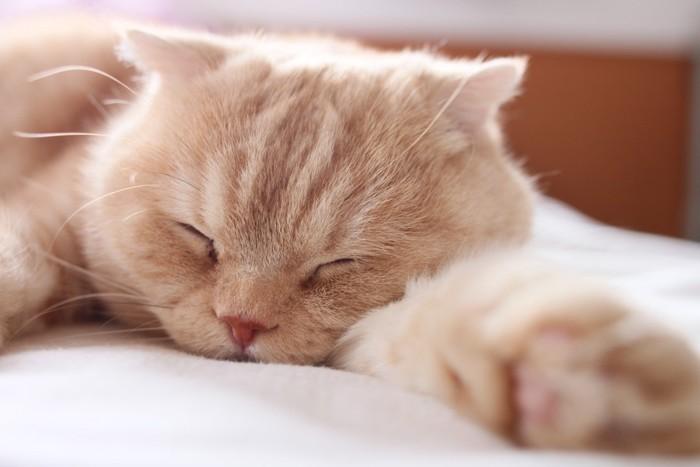 熟睡している猫