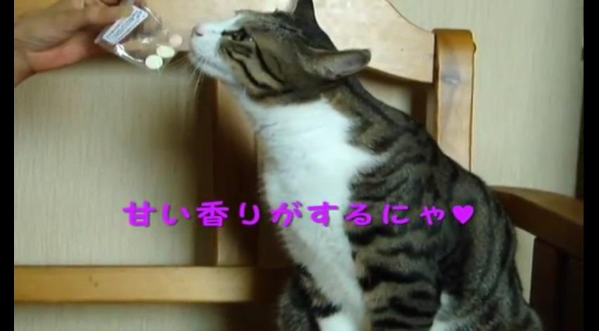 袋の匂いを嗅ぐ猫