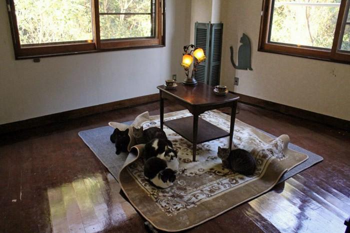 神戸の猫カフェ「アンティークアナスタシア」の部屋の中