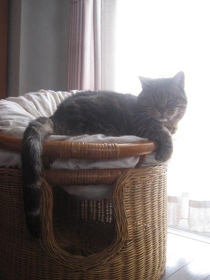 ソファで横になっている猫の写真