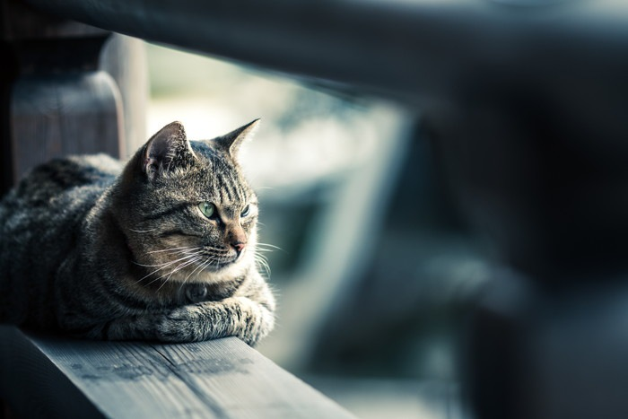 木の建物でくつろぐ猫