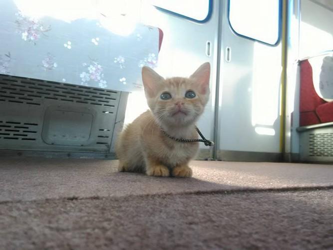 カーペットの上の子猫