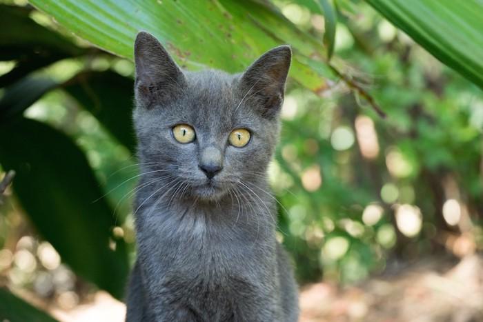 こちらを見つめる野良猫