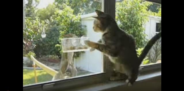 パンチする猫