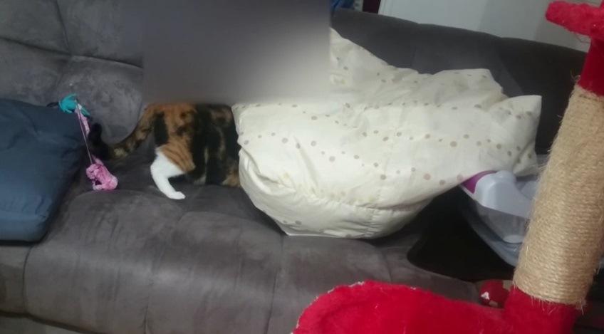 布団に潜り込む猫の脚