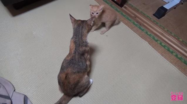 後ろ向きの母猫と怯える子猫