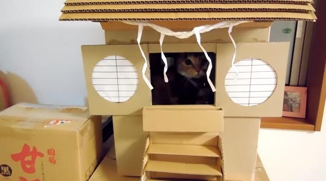 社殿の奥の猫