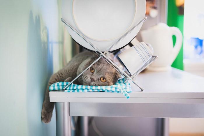 食器置きの下にもぐりこんでこちらを見る猫