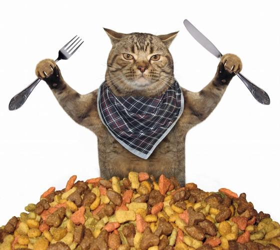 よだれかけを付ける猫