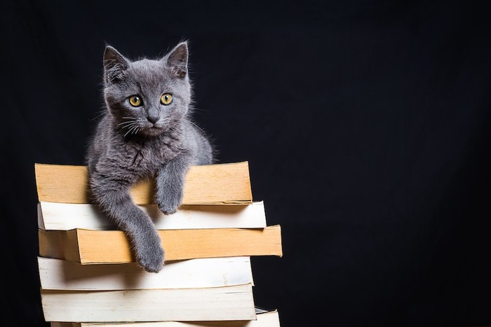 山盛りの本の上にいるグレーの猫