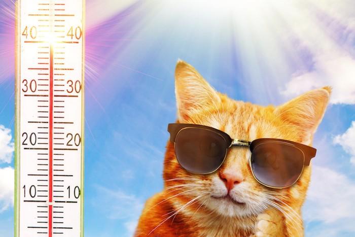 温度計とサングラスをした猫