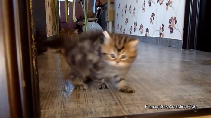 子猫に寄るカメラ