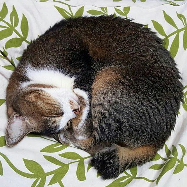 丸くなって眠る猫